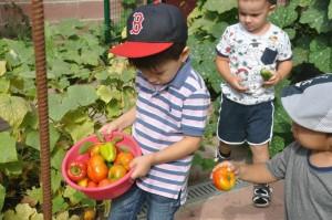 Наши детки на огороде